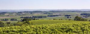 Vignobles - Cognac - © GrandAngouleme